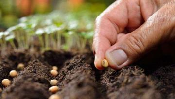 Introducing the Seed Certification System of Iranian Native and Local Cultivars to the World