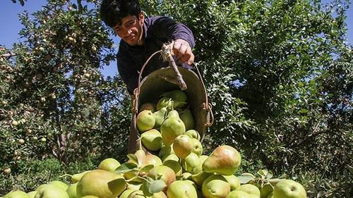 Iran Agricultural Exports Reach $5b in Six Months