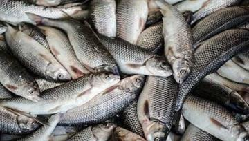 Annual fishery exports to hit $600m by Mar. 2020