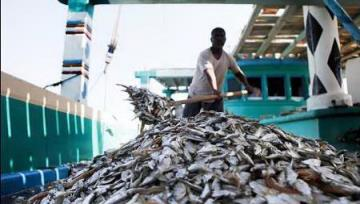 Seafood Exports Top $530m p.a.