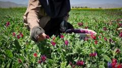Iranian town produces five of rare medicinal herbs yearly