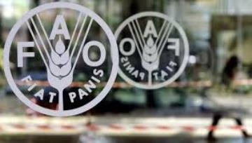 Wheat, meat push FAO Food Price Index higher in June