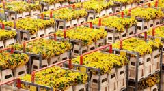 Iran's Flower Industry Ready to Bloom Globally