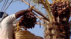 Iran exports $403m worth of dates, raisins in one year