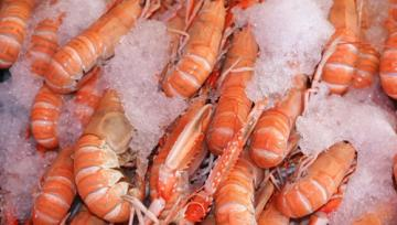 Shrimp exports exceed 24,000 tons in 9 months