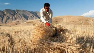 Iran self-sufficient in wheat production for 4th consecutive year